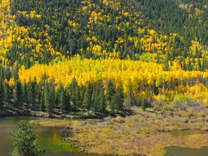 Colorado Fall Foliage