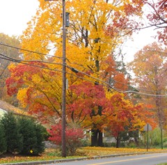 New Jersey Fall Foliage